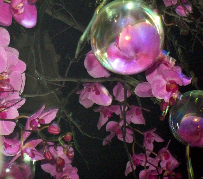 tn_Выставка цветов 081 (700x620, 594Kb)
