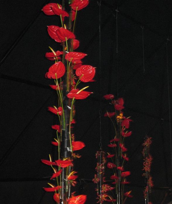 tn_Выставка цветов 119 (588x700, 371Kb)