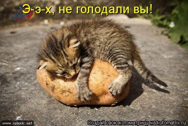 kotomatrix_1372 (640x427, 66Kb)