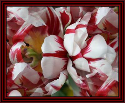 Схема - Милые тюльпаны