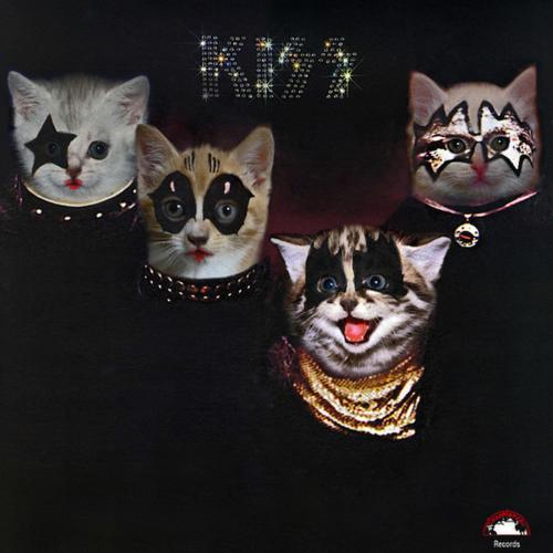Resultado de imagen de gatos queen