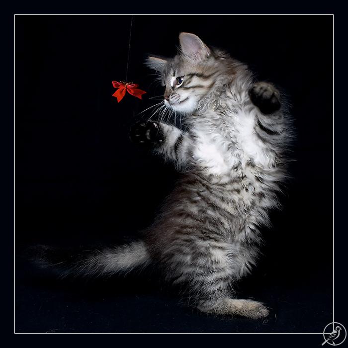 kitten45 (700x700, 95Kb)