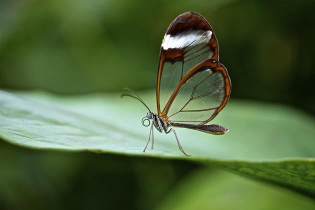 бабочка из ткани фото