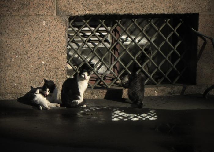 4329935_cats_Herm4 (700x498, 240Kb)