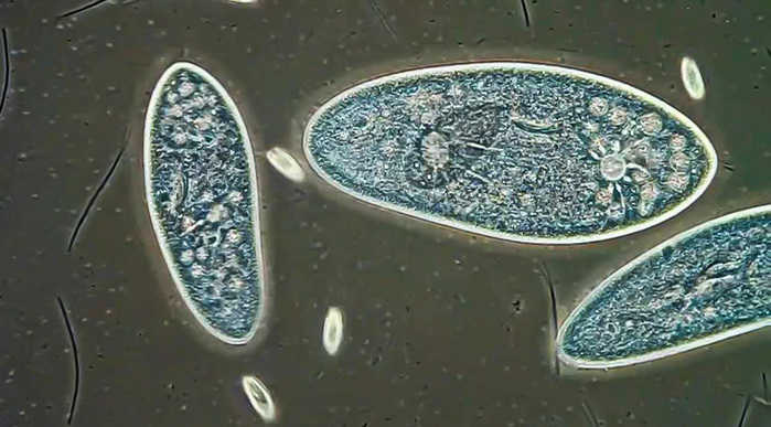 luchshie-raboty-s-fotokonkursa-olympic-bioscapes-07 (700x387, 113Kb)