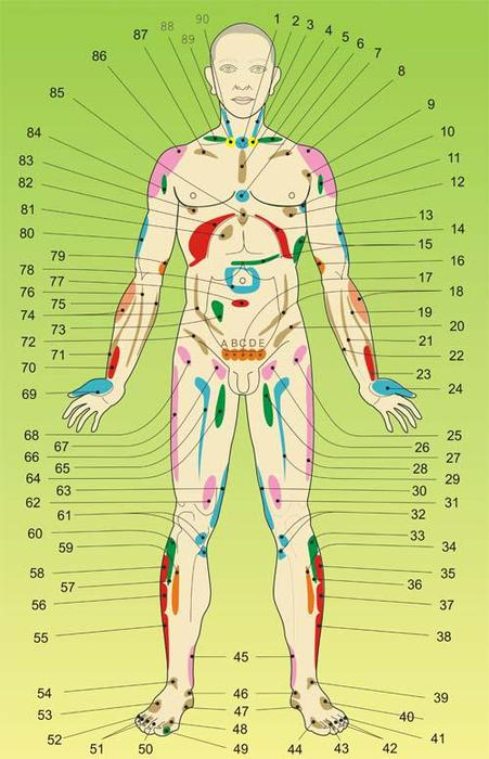 Проекционные зоны внутренних органов на теле человека со стороны живота 86015556_large_hed_zone_zhivot