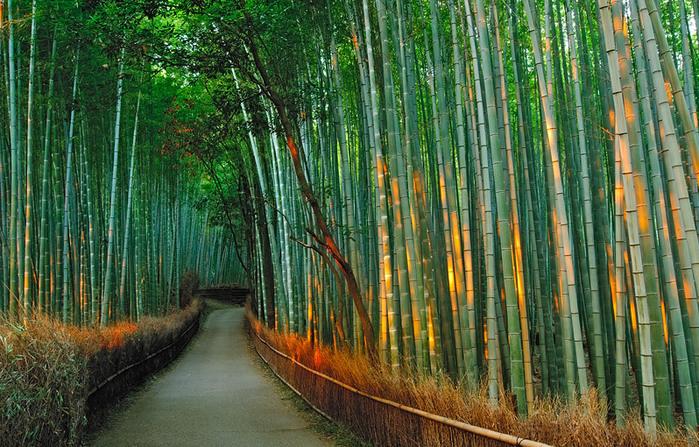 бамбуковая роща фото 1 (700x447, 198Kb)