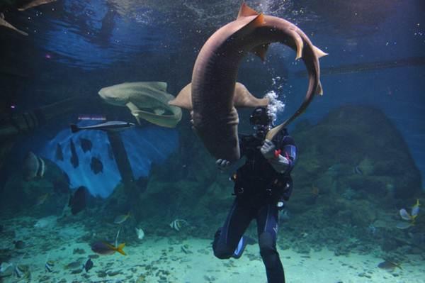 Кормление акул в московском океанариуме