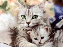 кошки (259x194, 8Kb)