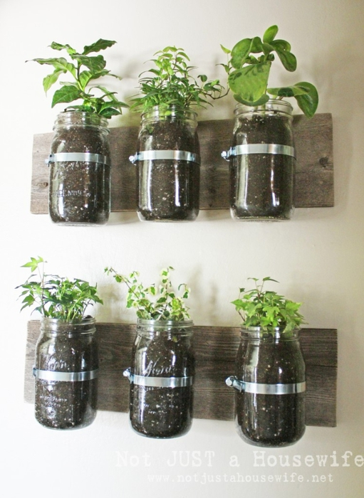 mason-jar-planter-board-747x1024 (511x700, 238Kb)