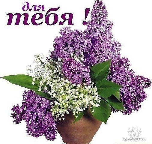 цветы (507x480, 69Kb)