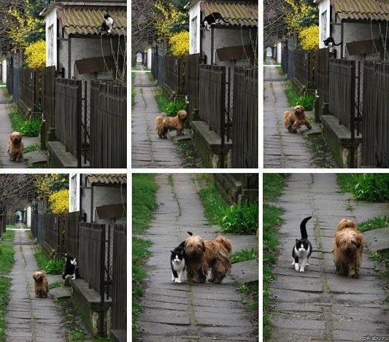 кошка+собака (546x480, 68Kb)