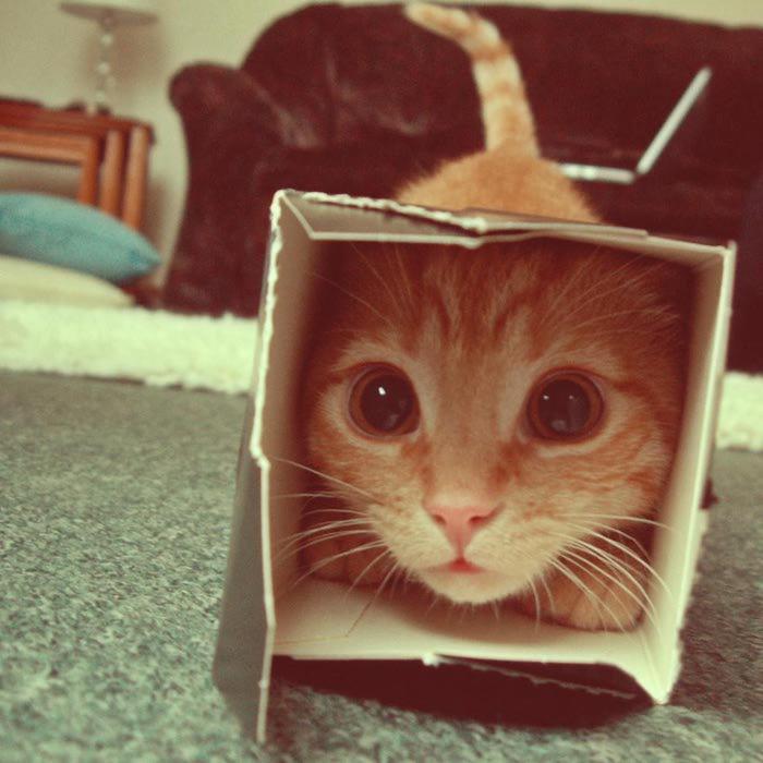 img_catsmob_dot_com_20120414_00686_017 (700x700, 55Kb)