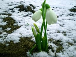 весна1 (259x194, 10Kb)