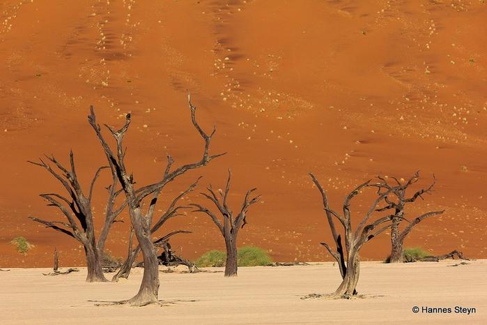 мертвая долина в пустыне намиб (700x466, 92Kb)