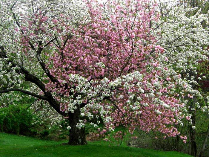 Résultat d'images pour printemps à Rambouillet
