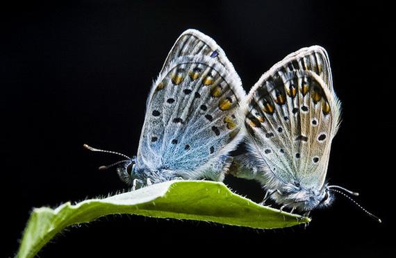 фото насекомых (570x372, 99Kb)