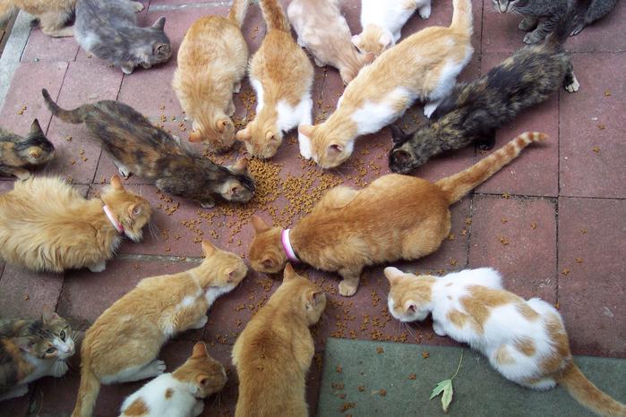 cats (700x466, 508Kb)