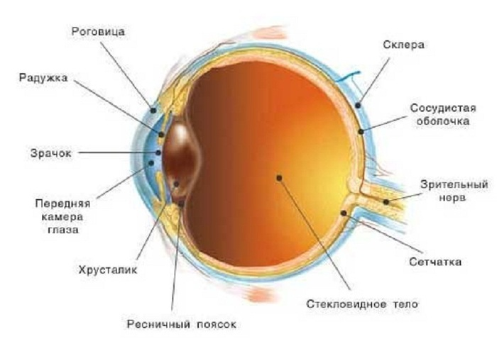 Зрение человека картинки 2