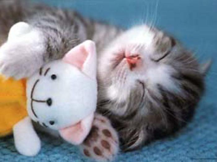 kitten-and-teddy (700x525, 32Kb)