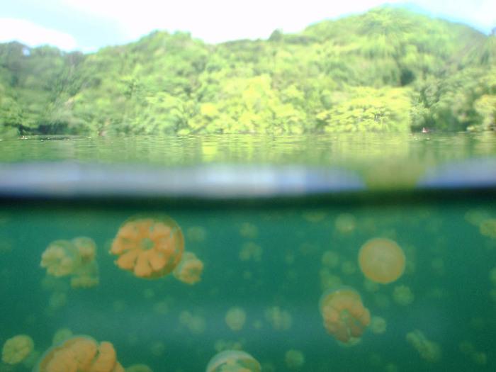медузы фото 2 (700x525, 85Kb)