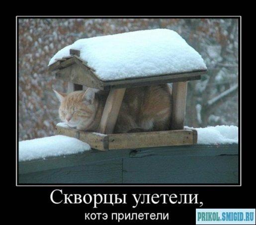 1329078297_Demotivatory_pro_KOTE_20 (515x453, 38Kb)