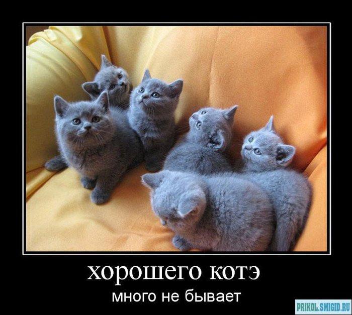 1329078300_Demotivatory_pro_KOTE_52 (700x627, 73Kb)