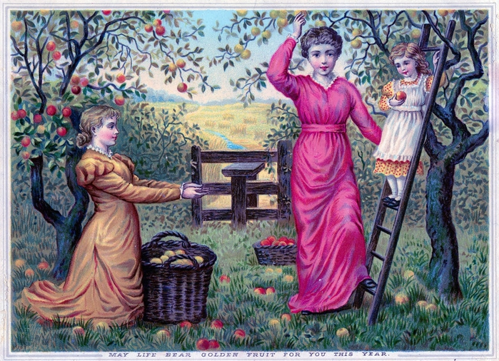 apple harvest vintage image graphicsfairy10 (700x506, 379Kb)