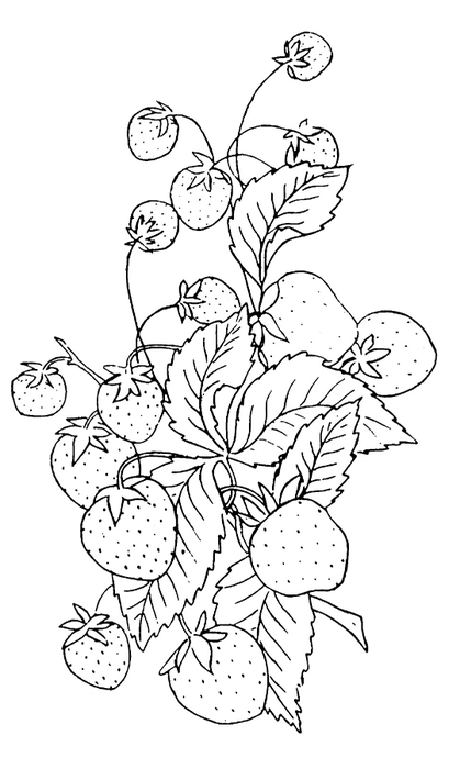 strawberries-Embroiderey-GraphicsFairy (419x700, 116Kb)