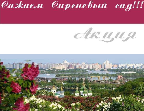 4498623_Sajaem_sirenevii_sad (600x461, 104Kb)