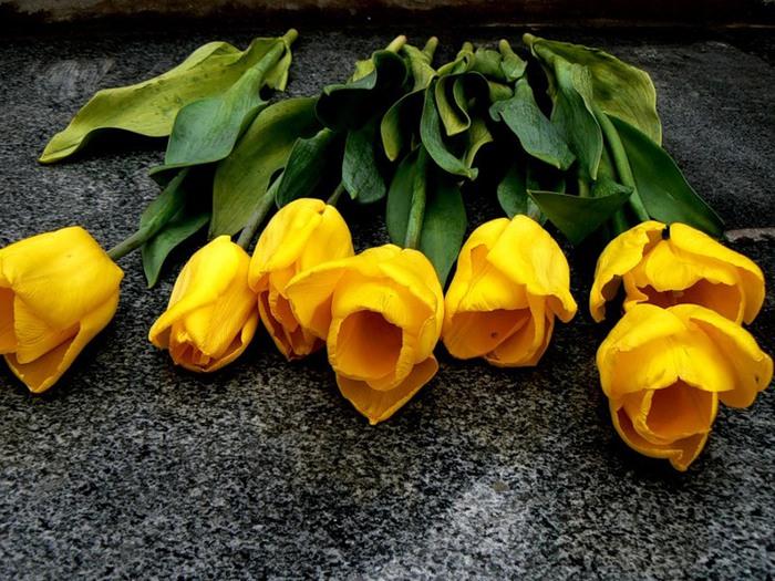 Цветы в машине фото 3