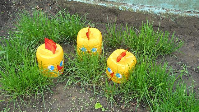 Украшения для сада - Самое интересное