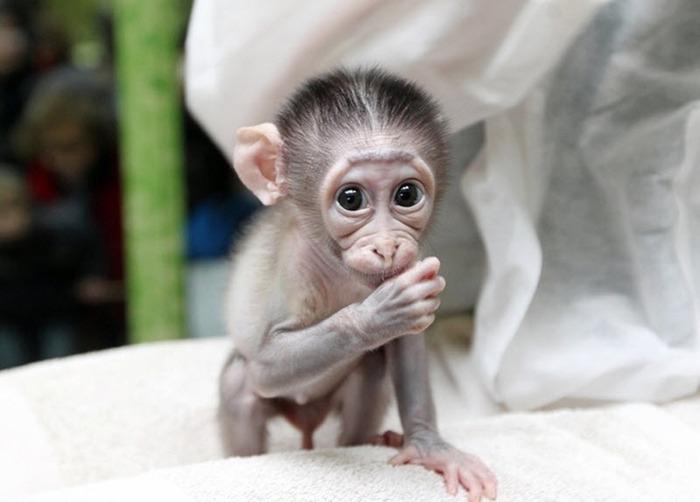 смешная обезьянка фото 1 (700x502, 70Kb)