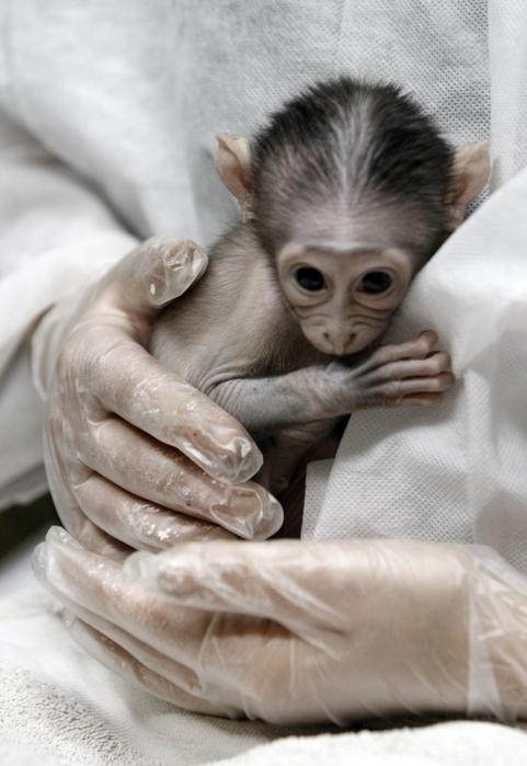 смешная обезьянка фото 4 (481x700, 274Kb)