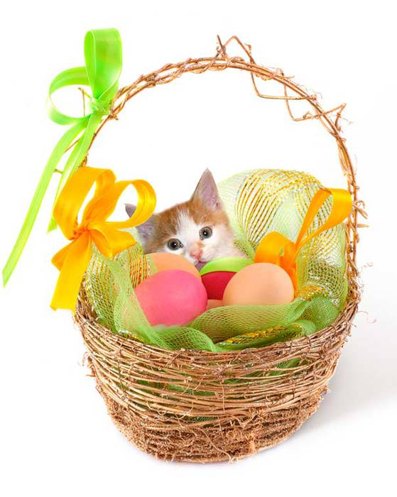 easter_cat1 (559x700, 49Kb)