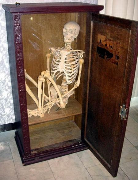 Скелет (450x588, 54Kb)