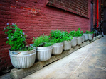 ������ 167-herb-garden-in-raised-metal-buckets_rect540 (540x405, 197Kb)