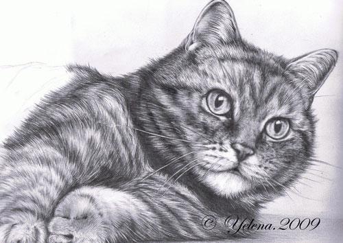 Кот нарисованный простым карандашом как вам