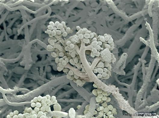 mold (528x393, 110Kb)