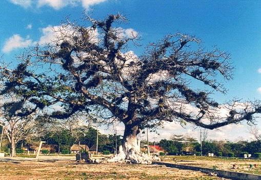 Майя Мир дерево df4a (509x350, 93Kb)