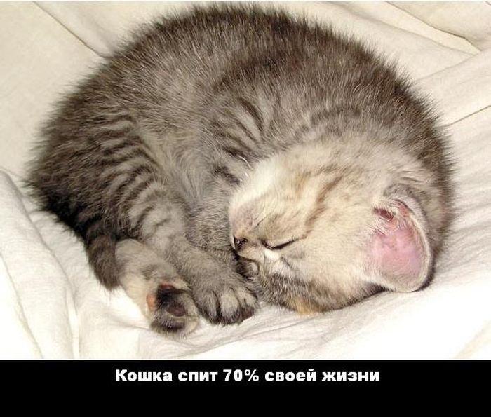 interesnye_fakty_43_foto_8 (700x595, 75Kb)