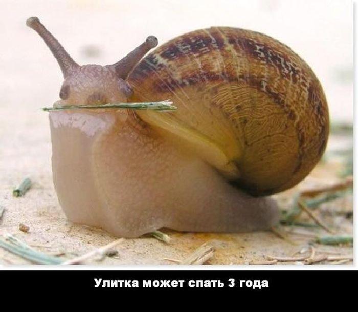 interesnye_fakty_43_foto_13 (700x609, 54Kb)