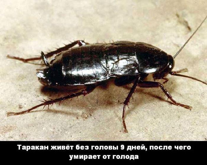 interesnye_fakty_43_foto_39 (700x560, 71Kb)