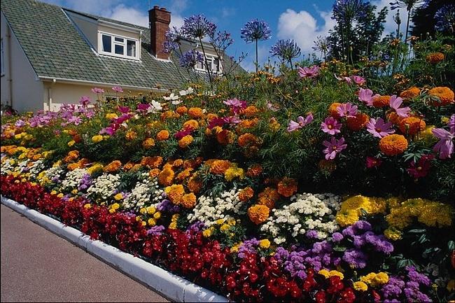 бордюрные цветы фото: