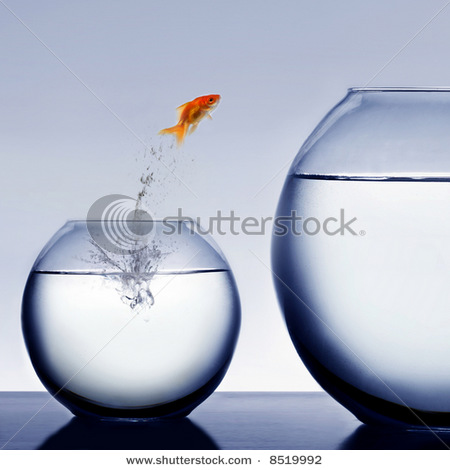 stock-photo-goldfish-jumping-out-of-the-water-8519992 (450x470, 45Kb)