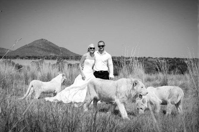 белые львы фото 7 (670x447, 60Kb)