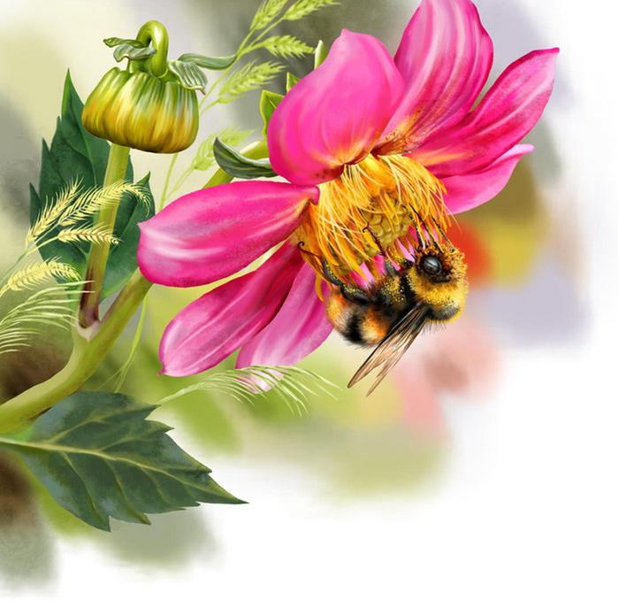 Цветы ландшафты дача природа записи