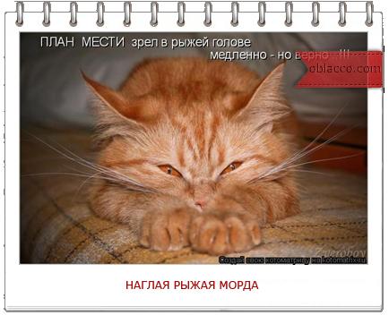 наглая рыжая морда/3518263_shablon_2_ (434x352, 212Kb)