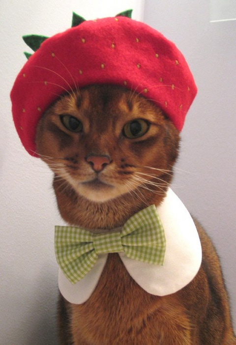 Hats-for-Cats-04 (480x700, 87Kb)