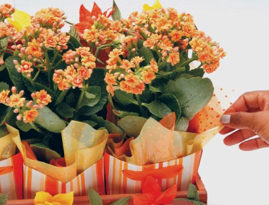 1331125485_flores-laranja_passo10_06-03-12 (533x407, 65Kb)